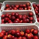nectarines-de-exportacion