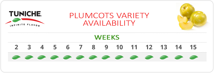 PLUMCOTS VARIETY AVAILABILITY